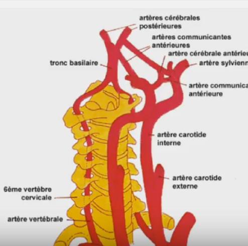 defile cervico thoracique